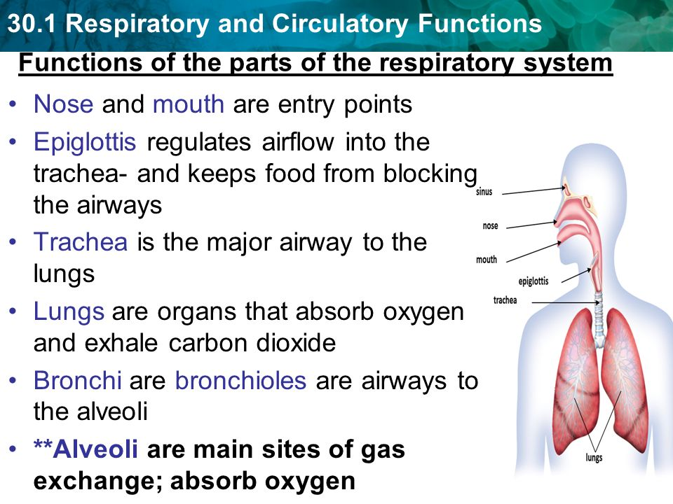 301 Respiratory Functions Ppt Video Online Download