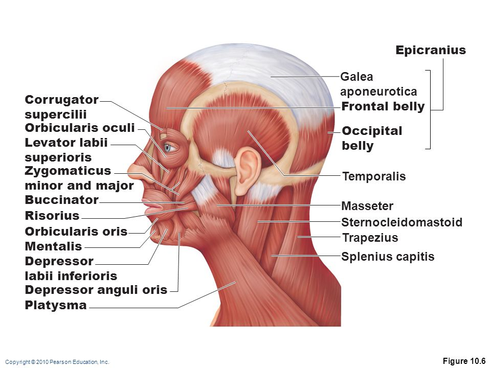Mentalist Diagram Muscles Of Facial Expression Illustration Of