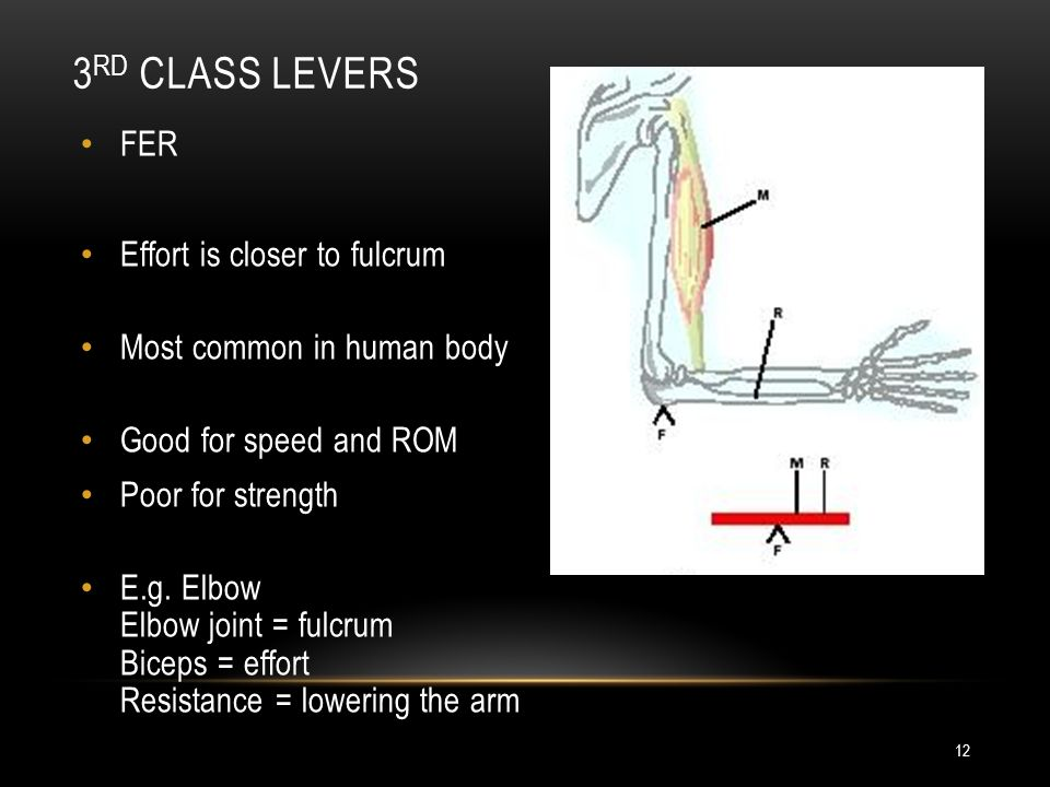 Levers Kinesiology Unit Ppt Download