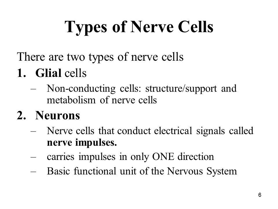 The Nervous System E Mcintyre Ib Biology Ppt Video Online Download