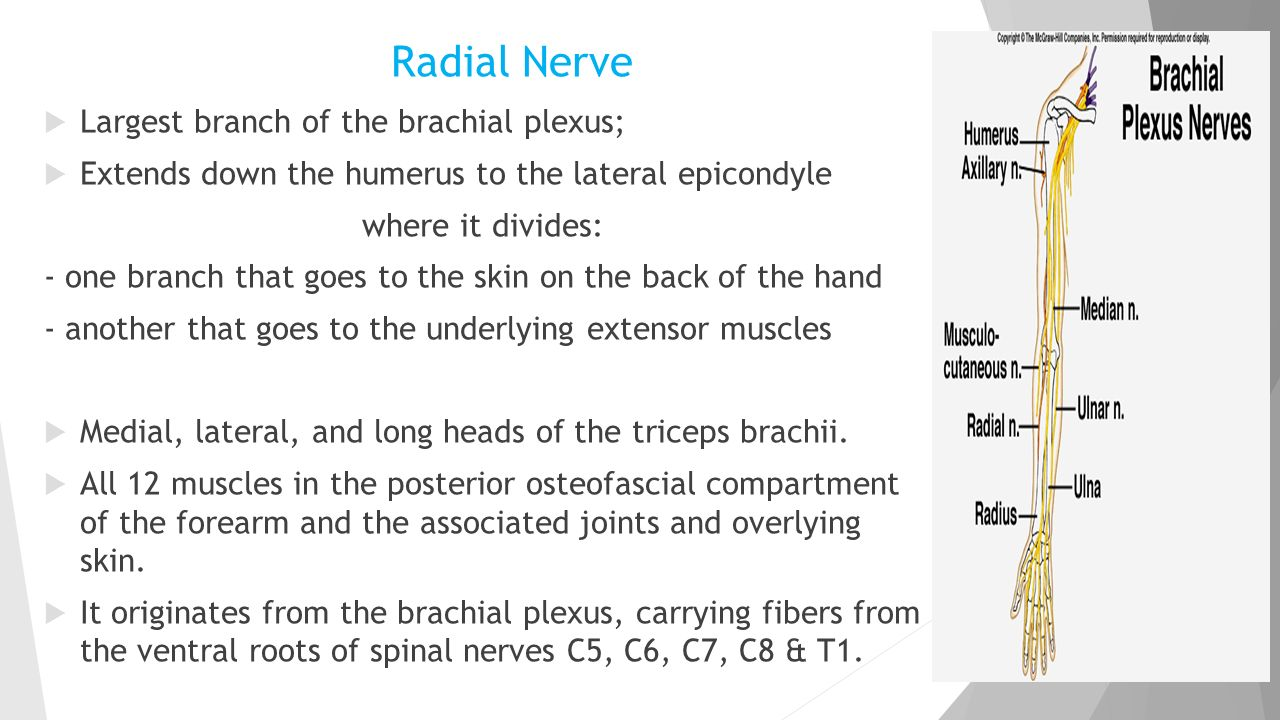 Radial: this is what branch, which means and where is