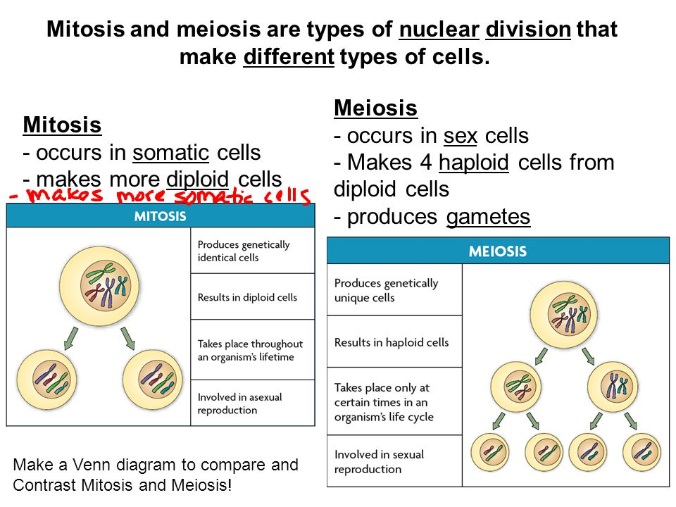 mitosis and meiosis are types of nuclear division that