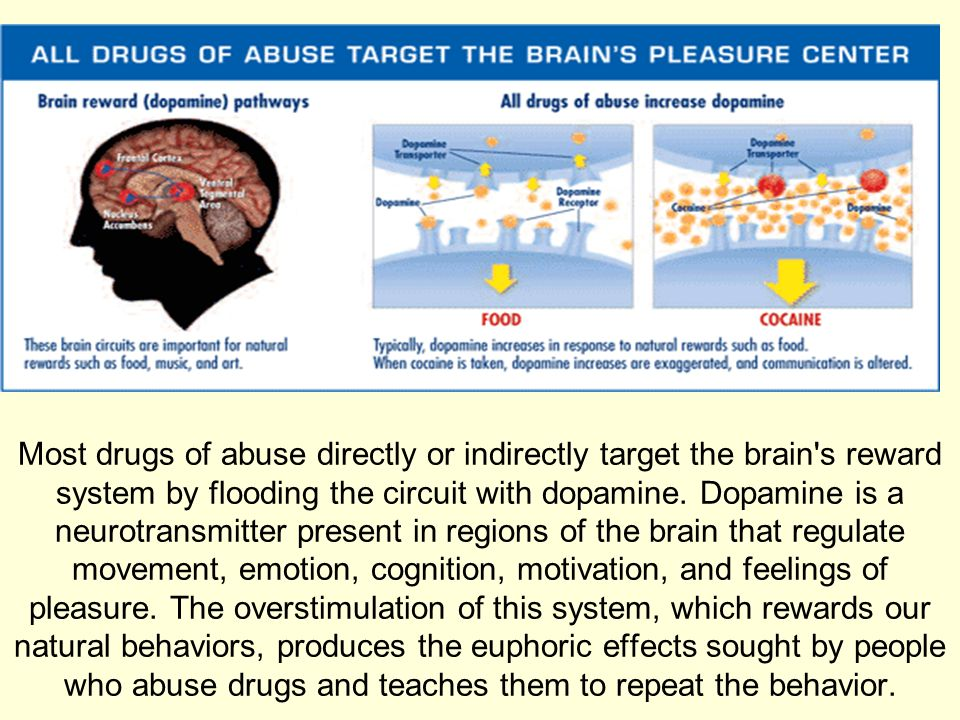 Aim How Do Drugs Affect The Brain Ppt Download