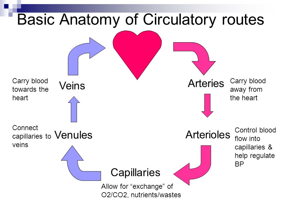 Cardiovascular system - Blood Vessels Chapter ppt download
