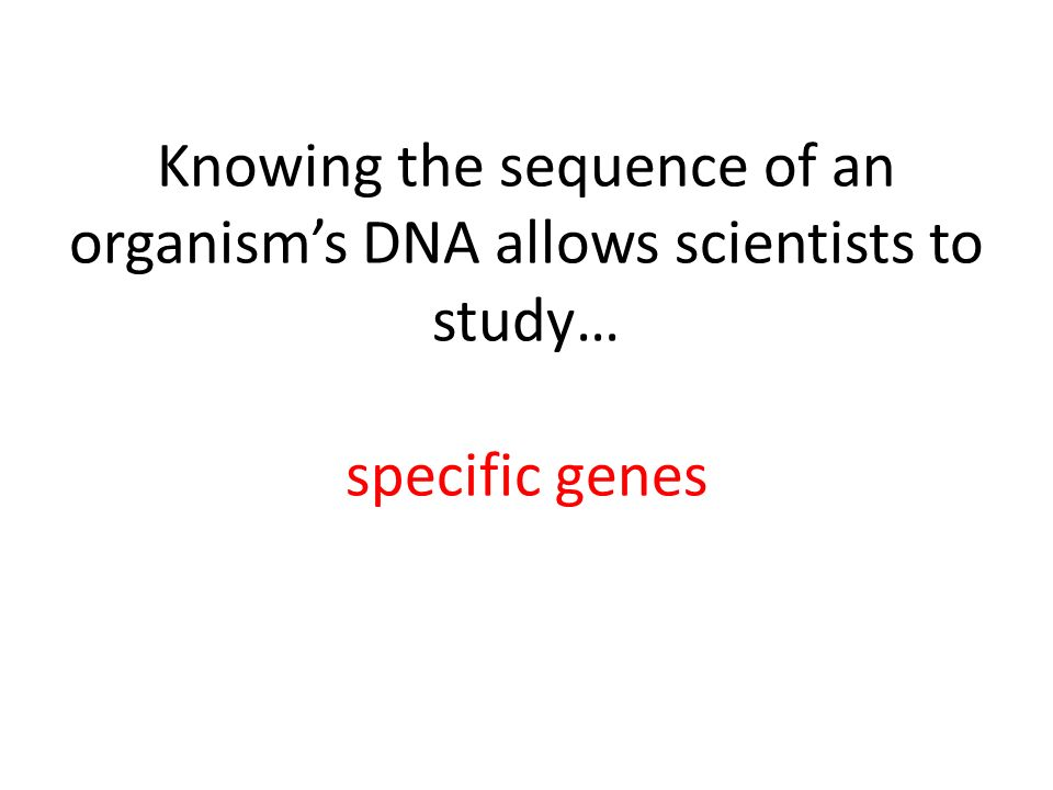 Knowing the sequence of an organism's DNA allows scientists to study… specific genes