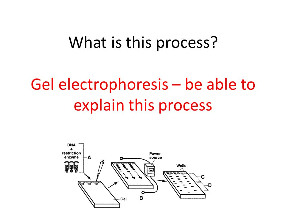 What is this process Gel electrophoresis – be able to explain this process
