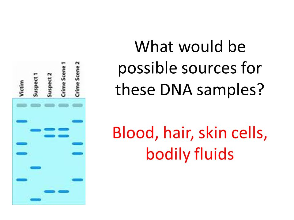 What would be possible sources for these DNA samples