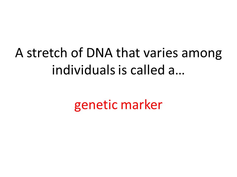 A stretch of DNA that varies among individuals is called a… genetic marker