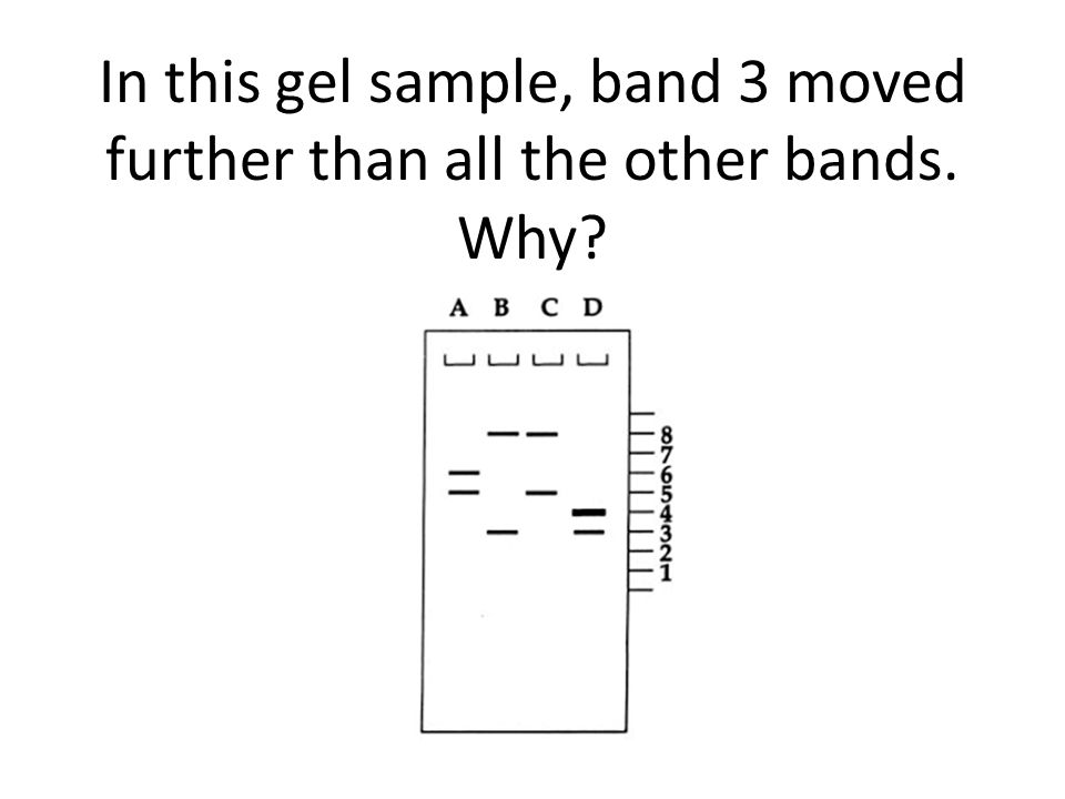 In this gel sample, band 3 moved further than all the other bands. Why