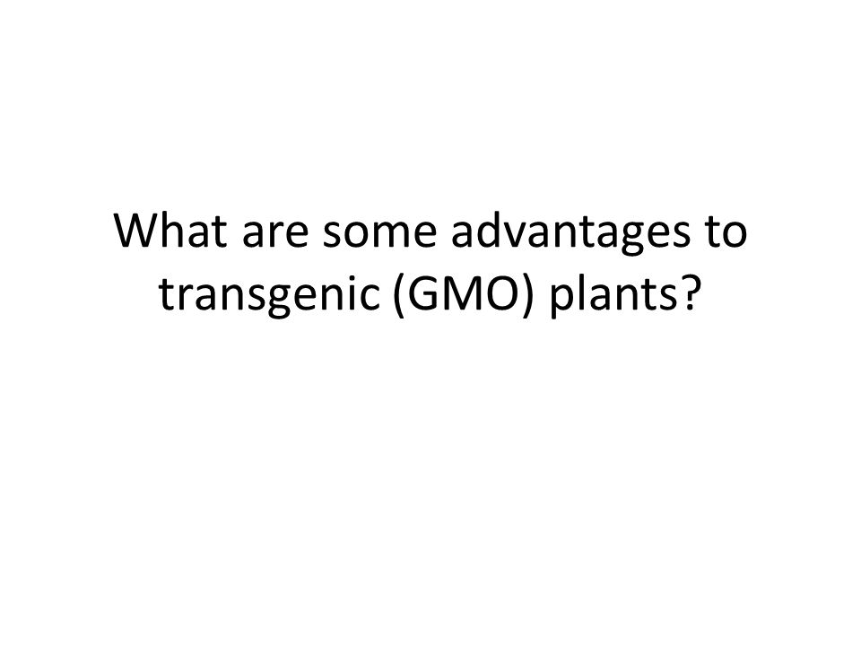 What are some advantages to transgenic (GMO) plants