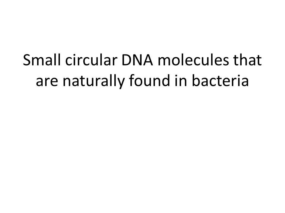Small circular DNA molecules that are naturally found in bacteria