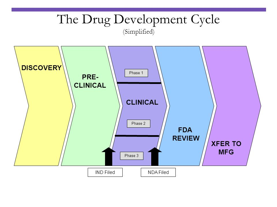The Drug Development Cycle (Simplified)