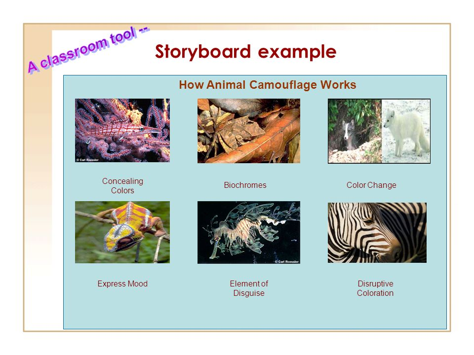 Student Inquiry in the Research Process  - ppt video online