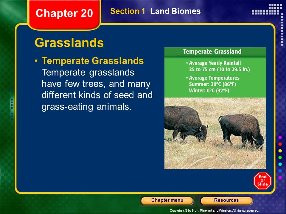 Chapter 20 Section 1 Land Biomes. Grasslands.