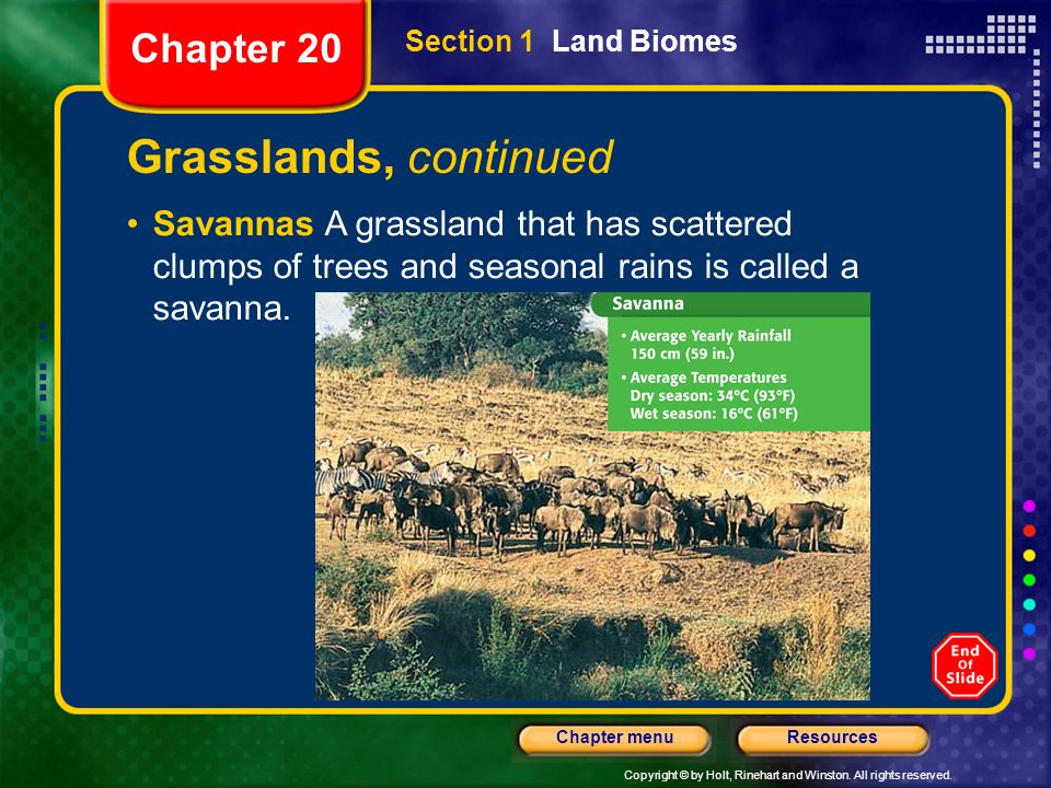 Grasslands, continued Chapter 20