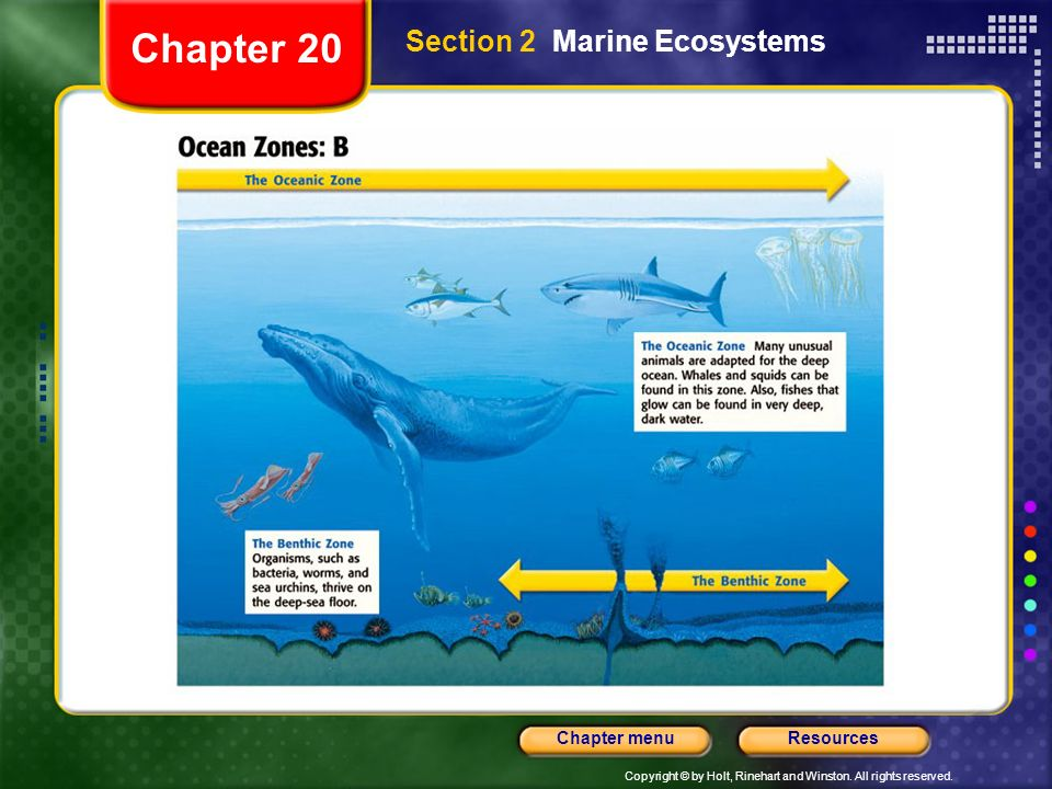Chapter 20 Section 2 Marine Ecosystems