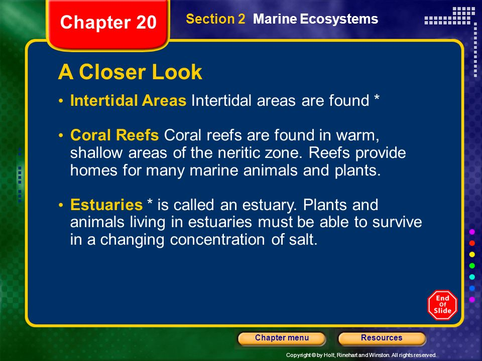 A Closer Look Chapter 20 Intertidal Areas Intertidal areas are found *