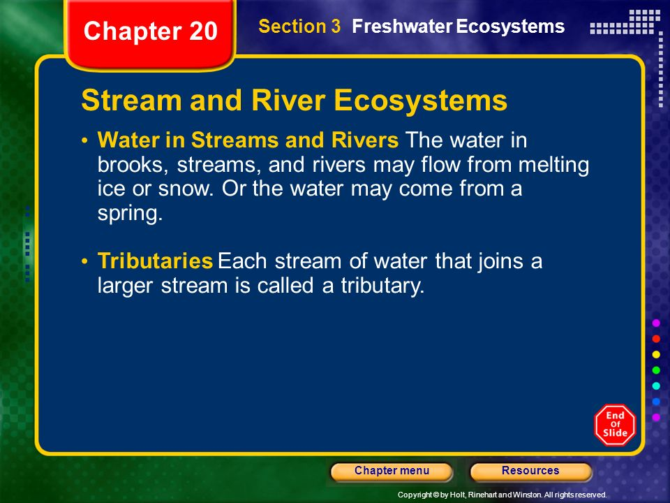 Stream and River Ecosystems