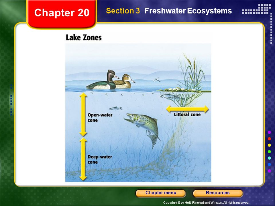 Chapter 20 Section 3 Freshwater Ecosystems