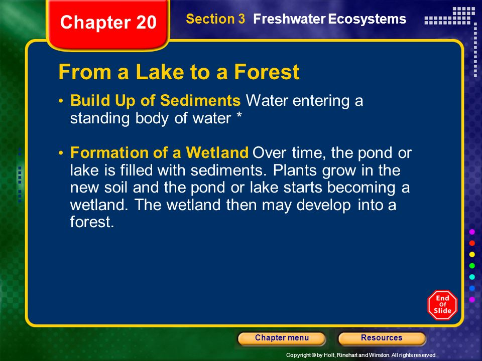 From a Lake to a Forest Chapter 20