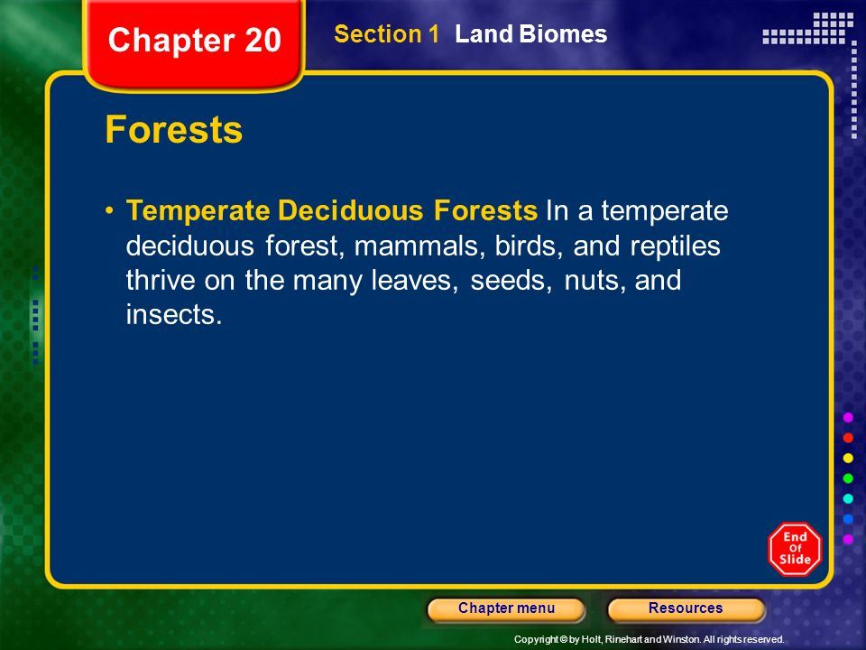 Chapter 20 Section 1 Land Biomes. Forests.