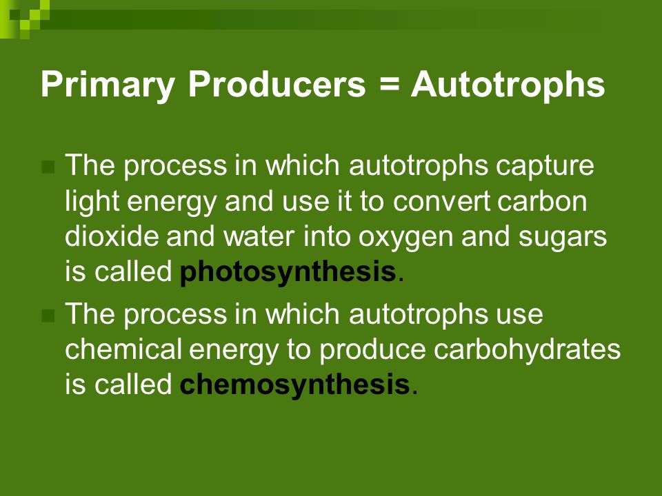 Primary Producers = Autotrophs