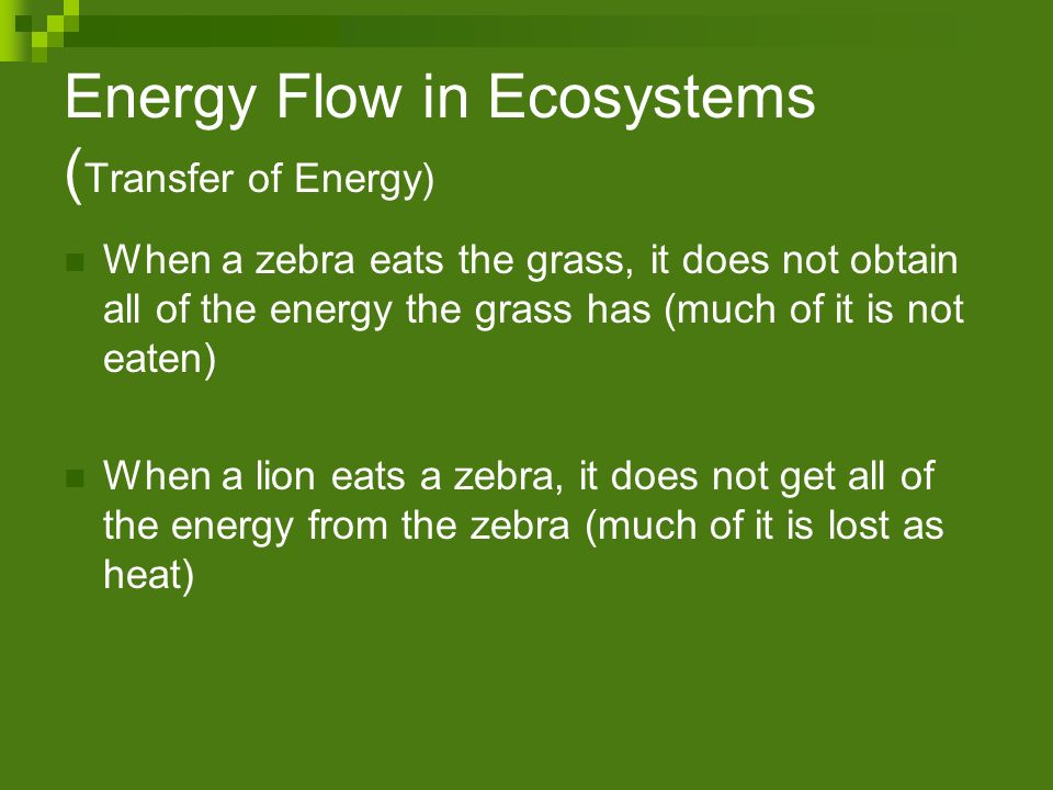 Energy Flow in Ecosystems (Transfer of Energy)