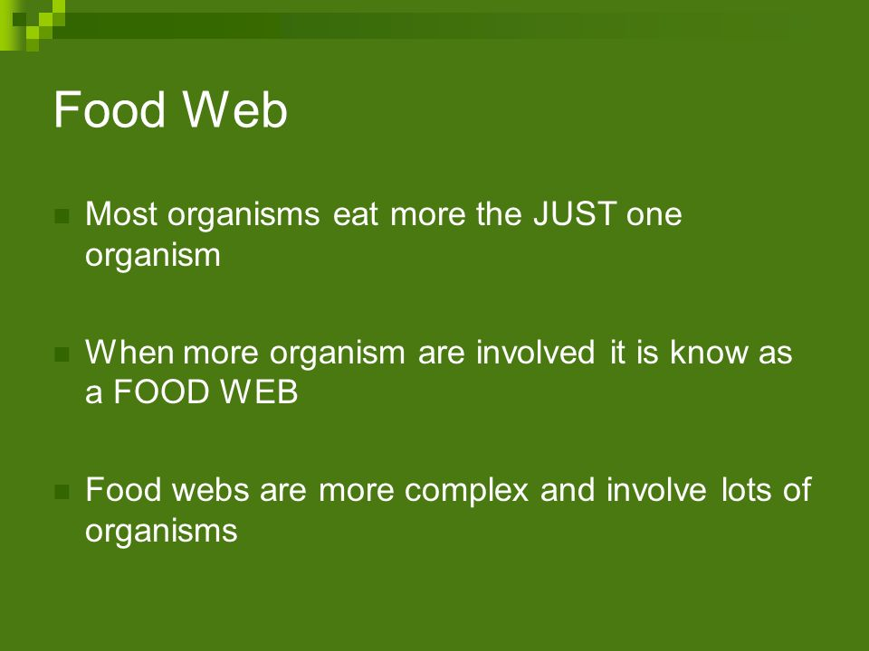 Food Web Most organisms eat more the JUST one organism