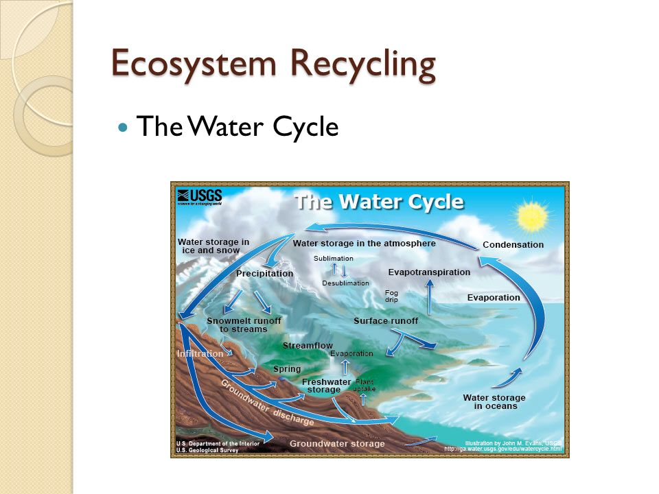 Ecosystem Recycling The Water Cycle