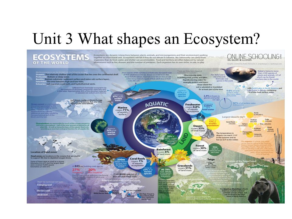 Unit 3 What shapes an Ecosystem