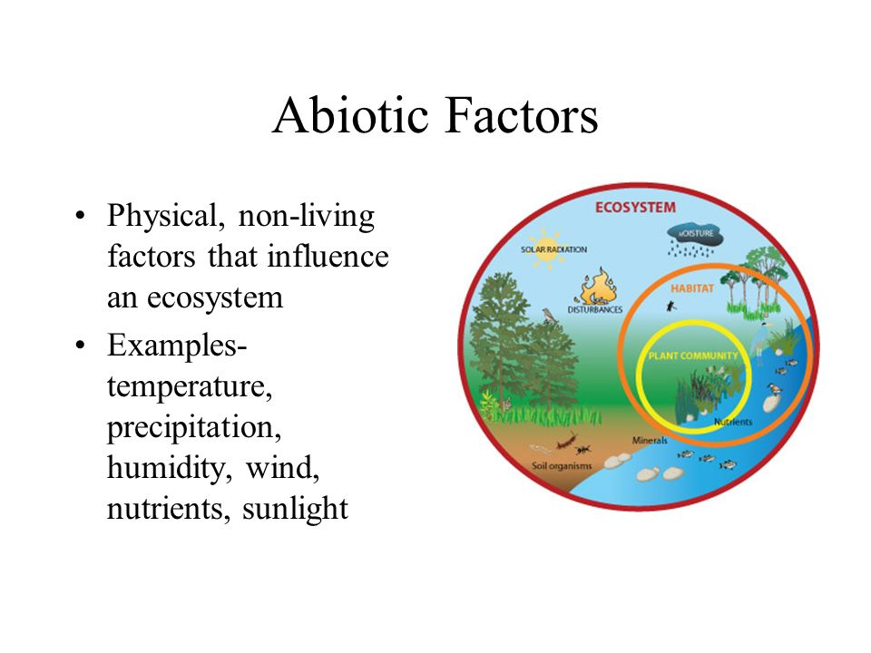 Abiotic Factors Physical, non-living factors that influence an ecosystem.