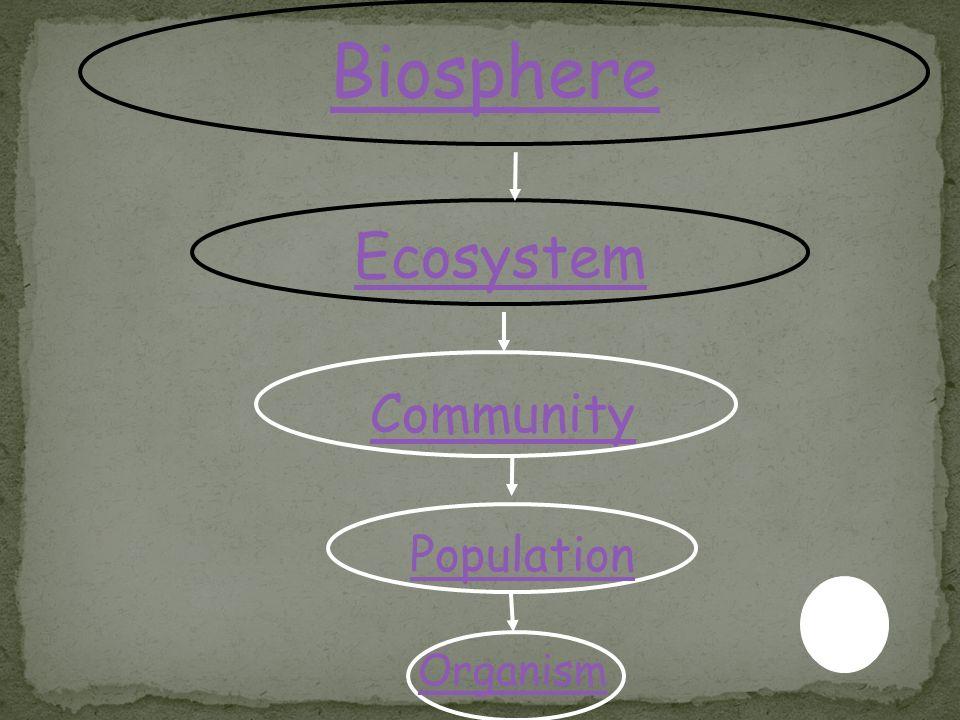Unit 7 ecology ppt video online download biosphere ecosystem community population organism ccuart Images