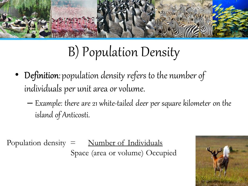 Population and Communities - ppt video online download
