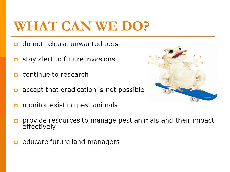 WHAT CAN WE DO do not release unwanted pets