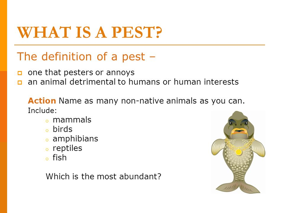 WHAT IS A PEST The definition of a pest – one that pesters or annoys