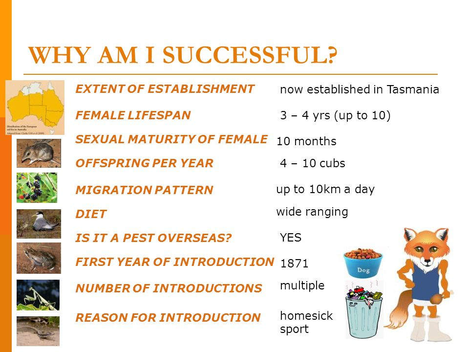 WHY AM I SUCCESSFUL now established in Tasmania FEMALE LIFESPAN