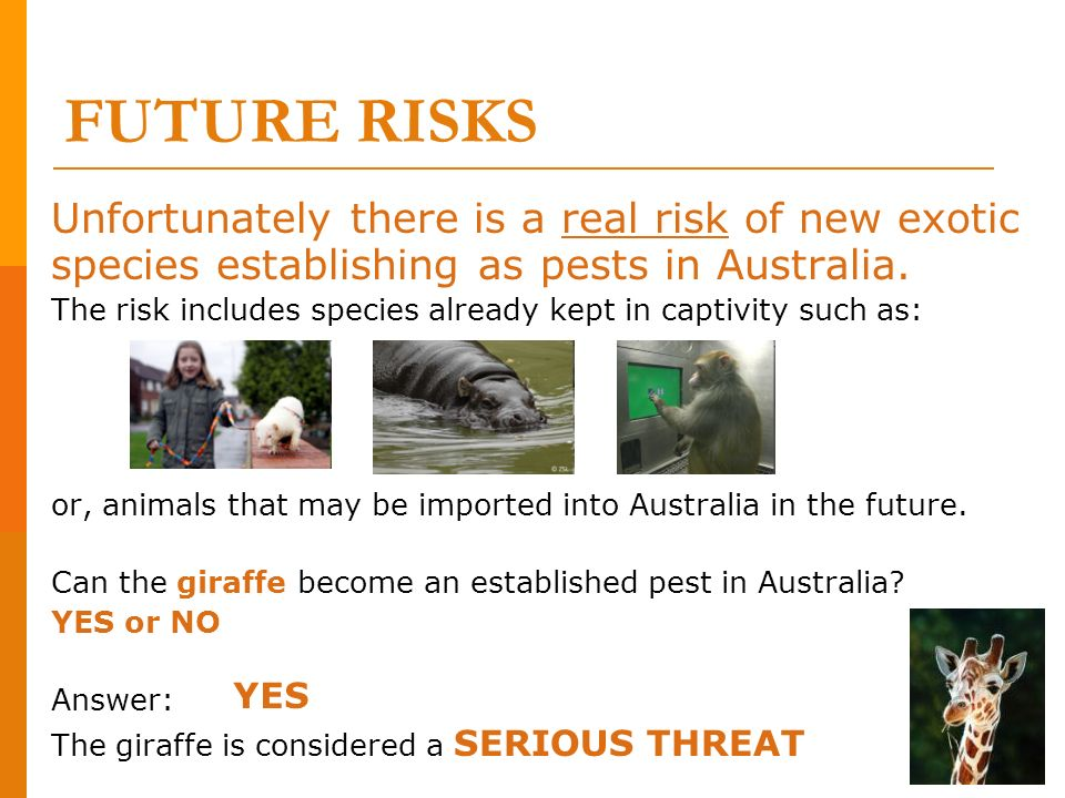 FUTURE RISKS Unfortunately there is a real risk of new exotic species establishing as pests in Australia.