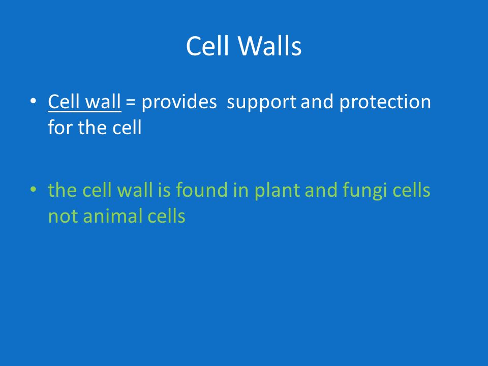 Cell Walls Cell wall = provides support and protection for the cell