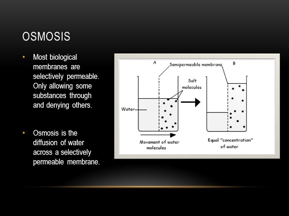 Osmosis Most biological membranes are selectively permeable. Only allowing some substances through and denying others.