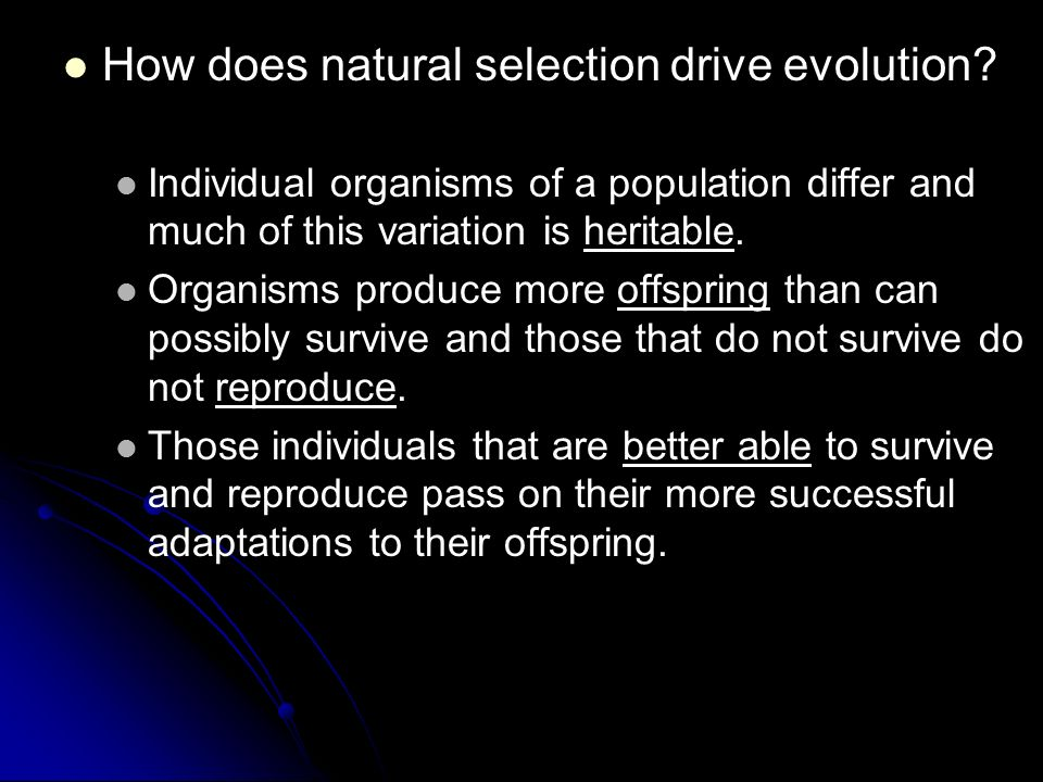 How Does Competition Drive Natural Selection