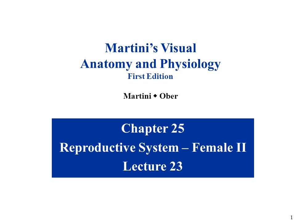Anatomy and Physiology Reproductive System – Female II - ppt download