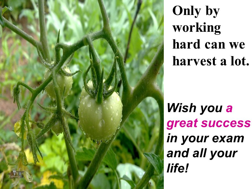 Only by working hard can we harvest a lot.