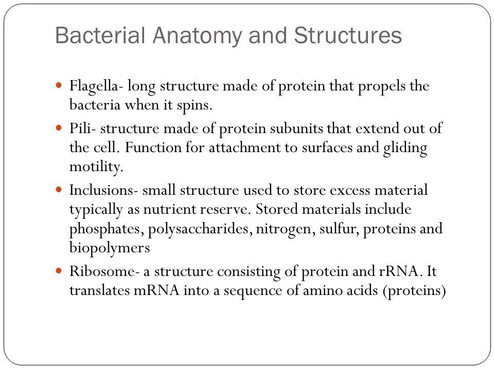 Basic Bacteriology. - ppt download