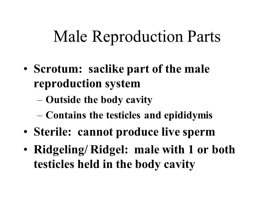 Animal Reproduction Terms - ppt download