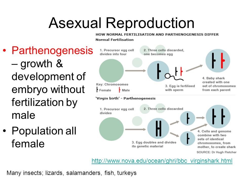Parthenogenesis versus asexual reproduction pictures