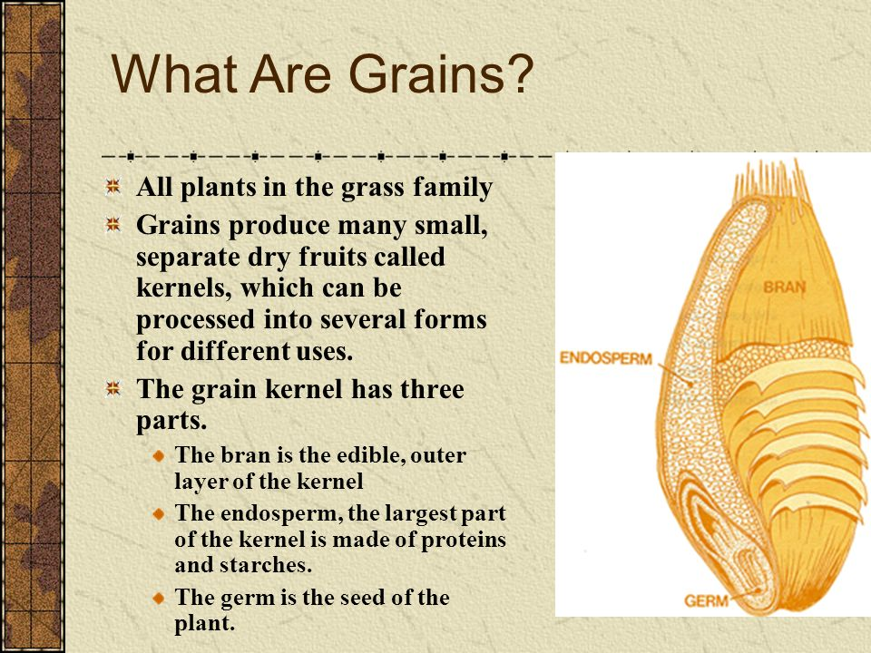 What Are Grains All plants in the grass family