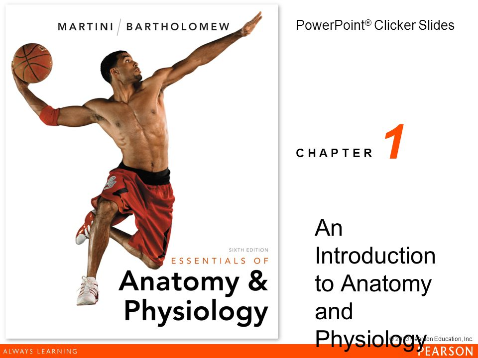 An Introduction to Anatomy and Physiology - ppt download