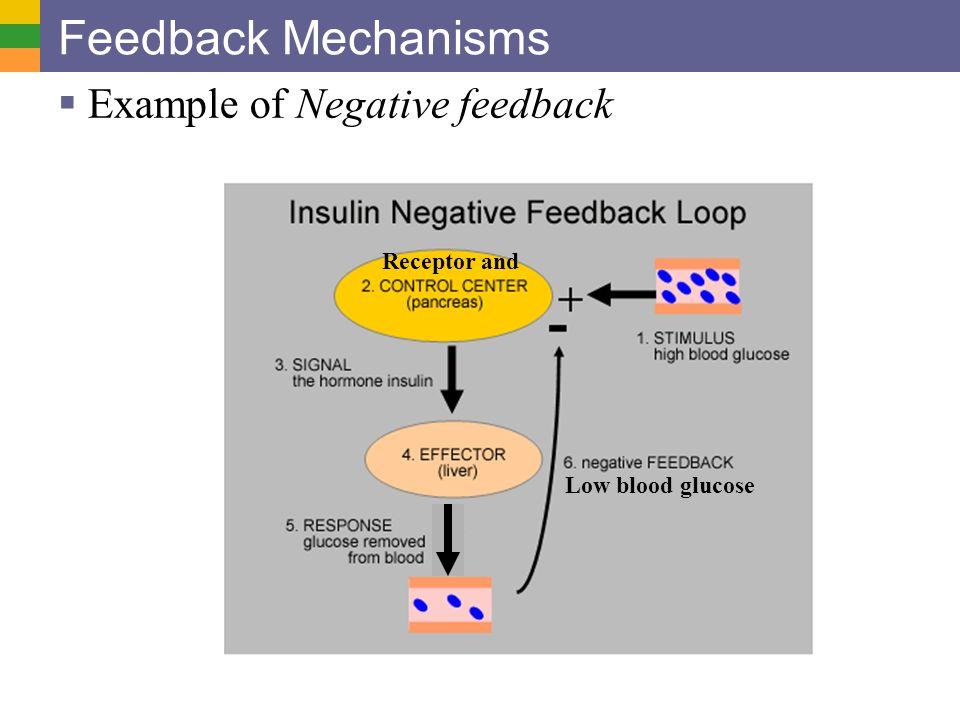 Endocrine system i superior glands ppt video online download 3 feedback mechanisms example of negative feedback receptor and ccuart Images