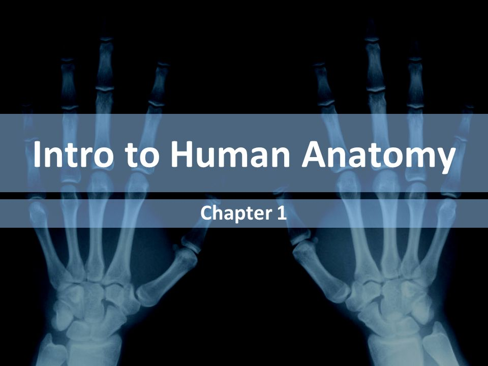 Intro To Human Anatomy Chapter Ppt Download