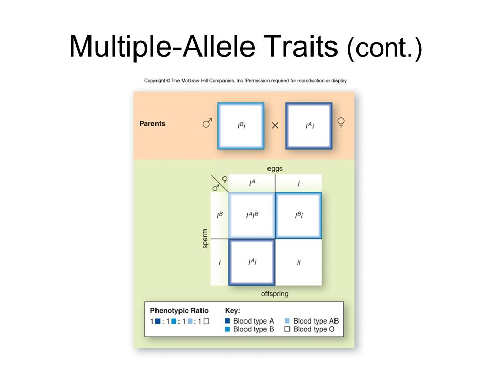 Multiple-Allele Traits (cont.)